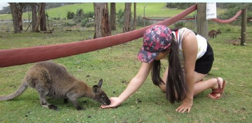 Ayumi's Tasmania Zoo visit